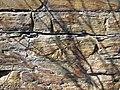 Soft-sediment deformation in sandstone (Vinton Member, Logan Formation, Lower Mississippian; Rt. 16 roadcut northeast of Frazeysburg, Ohio, USA) 6 (38882420360).jpg