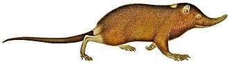 Eulipotyphla - 90 px