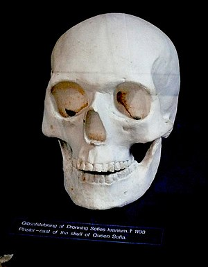 Sophia of Minsk - Plaster cast of her skull