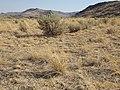 South of Marsing sagebrush steppe (I.O.N. cutoff) (9677451234).jpg