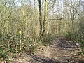Sparrow Wood, Bromley, Kent - geograph.org.uk - 137191.jpg