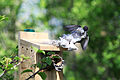 Sparrow nest with tissue 3.jpg