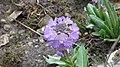 Spring in botanic garden - Cluj-Napoca (3438770387).jpg