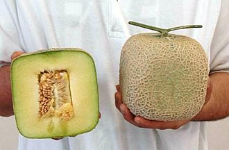 Muskmelon - Image: Squeredmelon inside 001