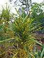 Sri Lanka (Southern Province)-Vegetation (4).jpg
