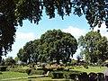 Srinagar - Shalimar Gardens 50.JPG