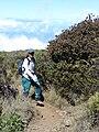 Starr 081014-0281 Santalum haleakalae.jpg