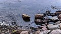 Stones at Barkedal beach 1.jpg