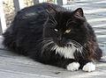 Stray female cat.jpg