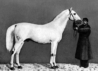 Strelets Arab Extinct Ukrainian breed of horse