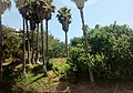 Studio City, Los Angeles, CA, USA - panoramio (5).jpg