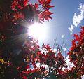 Sun peeking through the leaves (282155500).jpg