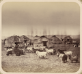 Syr Darya Oblast. Kyrgyz Summer Camp near Chimkent WDL10984.png