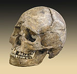 מגולגולת זו שנמצאה בחפירה ארכאולוגית הוסק שבעליה היא אישה בת 25 עד 35; הפגעים שבגולגולת מעידים על מוות בעקבות פציעה מיריית חץ.