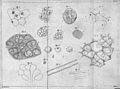 T. Schwann, Mikroskopische Untersuchungen Wellcome L0029115.jpg