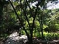 Tangkiling Nature 19.jpg