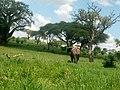 Tarangire national park.jpg