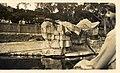 Tarong Park Zoo - 1937 (26811946440).jpg