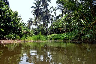 Thanikkudam Village in Kerala, India