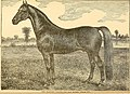 The American farmer's horse book; a pictorial cyclopedia of facts concerning the prominent breeds (1892) (18116399072).jpg
