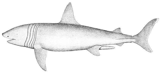 an overview of the basking shark This is why many countries have put bans on commercial fishing of the basking shark,  in the following we will give you an overview of all the different tasks you.