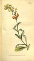 The Botanical Magazine, Plate 322 (Volume 9, 1795).png