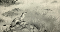 The Rabbit (1898) 'Stoat hunting rabbit'.png
