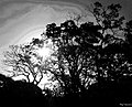 The Sun Through The Branches (54599806).jpeg