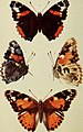 The butterflies of the British Isles (1906) (19888873454).jpg