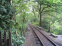 The track among the trees, Dolgoch - geograph.org.uk - 1311691.jpg