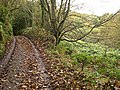 The upper reaches of Chapel Combe - geograph.org.uk - 366962.jpg