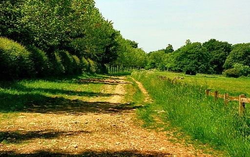 Through Badminton Estate - geograph.org.uk - 1734468