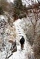 Through the snow clad path.jpg