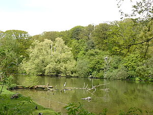 Nuremberg Zoo - Pond