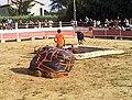 Toro-piscine à Orsan.jpg