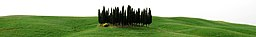 Toscana banner Copse in agricultural fields.jpg