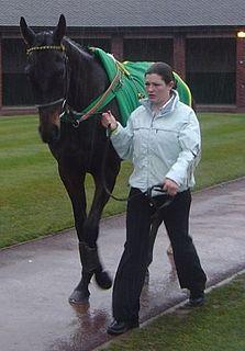 Trabolgan Irish-bred Thoroughbred racehorse