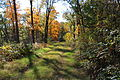 Trail in Pennsylvania State Game Lands Number 55.JPG