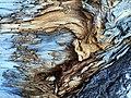 Tree bark pattern (Unsplash).jpg