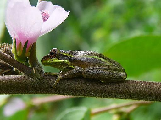 Tree frog Fern Forest