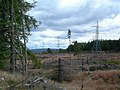 Trees And Pylons - geograph.org.uk - 518001.jpg