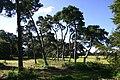 Trees at Rakeheath - geograph.org.uk - 545947.jpg