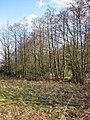 Trees growing alongside a drain - geograph.org.uk - 1190890.jpg