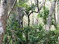 Trekking @ Wayanad wildlife Sanctuary - panoramio (4).jpg