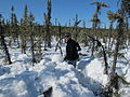 Trekking through snow at Infrasound Monitoring Station IS53 Fairbanks, Alaska USA (13288865404).jpg