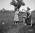 """Trgačica je prinesla """"kalau"""" polno grozdja, Slap 1958.jpg"""