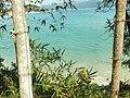 Trilha Praia de Cima - Pinheira - panoramio (2).jpg