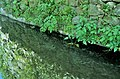 Trilho do rio Febro III (33789834211).jpg