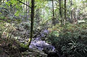 A shallow stream about 3 feet (1 m) wide cascades over a series of rocks in a sun-dappled second-growth forest.