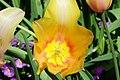 Tulip-8045.jpg